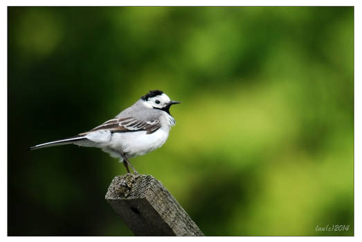 A little bird
