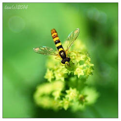 The same old yellow fly by vendoritza
