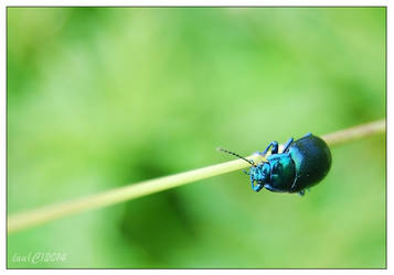 The very blue bug by vendoritza