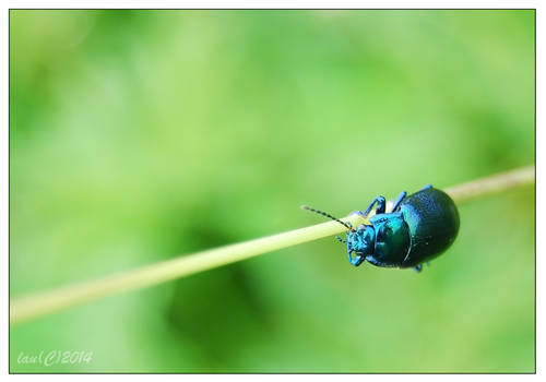 The very blue bug