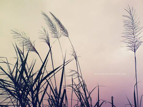 Old Breeze