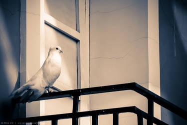 Pretty Bird by ice1215q