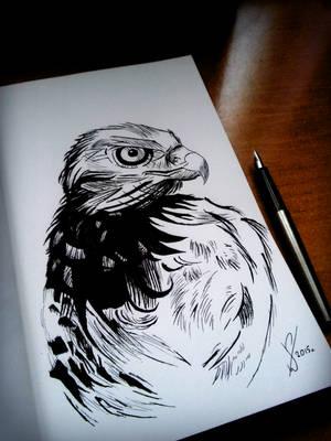 Eagle - ink sketch  by EndlessBloody