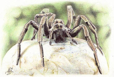 Ballpoint pen Spider by ArtisAllan