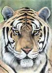Ballpoint pen Art - Big Cats