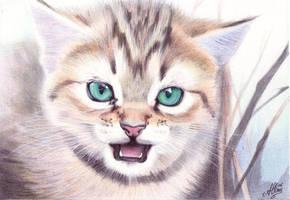 Little Cat by ArtisAllan