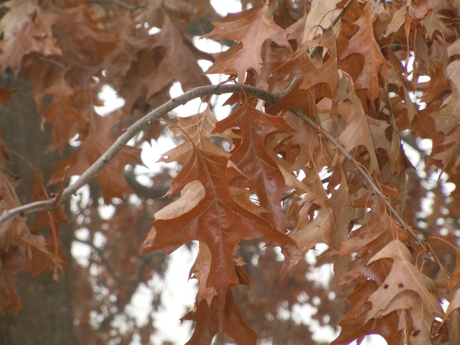 Leaves Close Up by CrazyLittleZebra