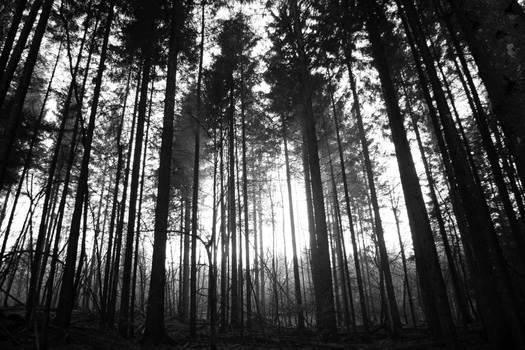 In the dark forest