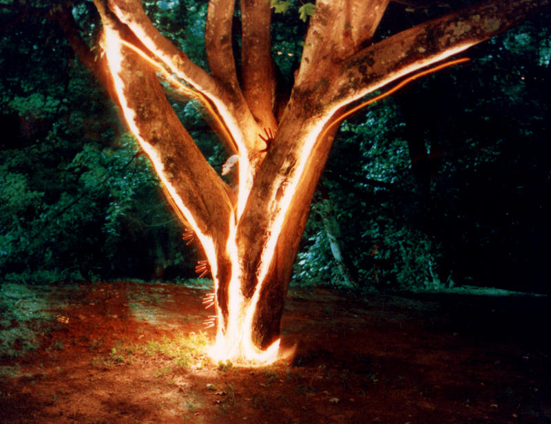 Arboreal Nocturne by faithwalker