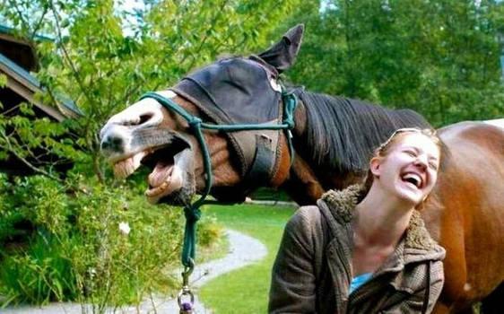 Just horseing around