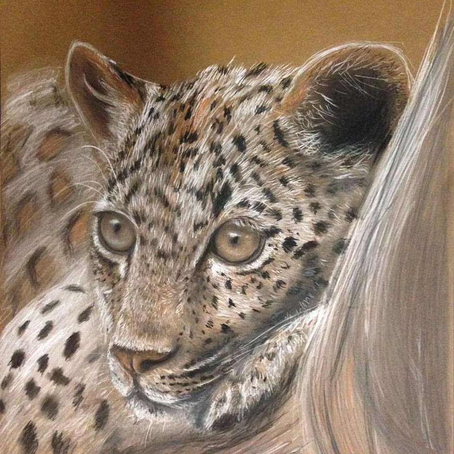 Leopard by lizzy1e
