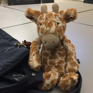 GiraffeMeow's Profile Picture