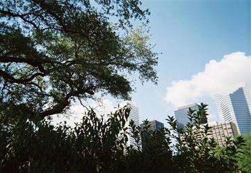 Downtown Skyline: Tree View by DMitchell1985