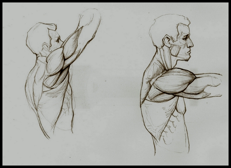 How to study anatomy for art
