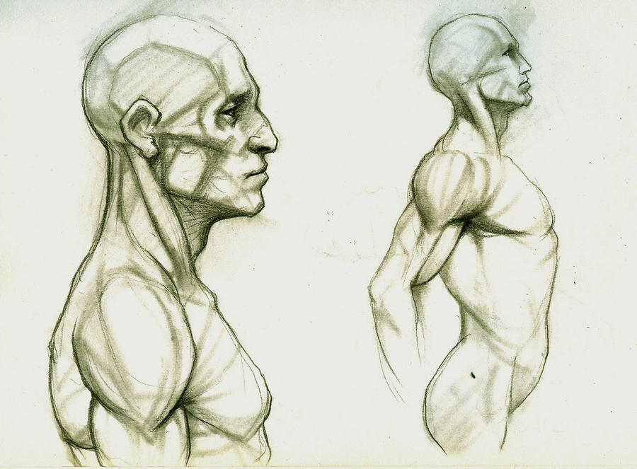 Anatomy Study by Kimsuyeong81 on DeviantArt
