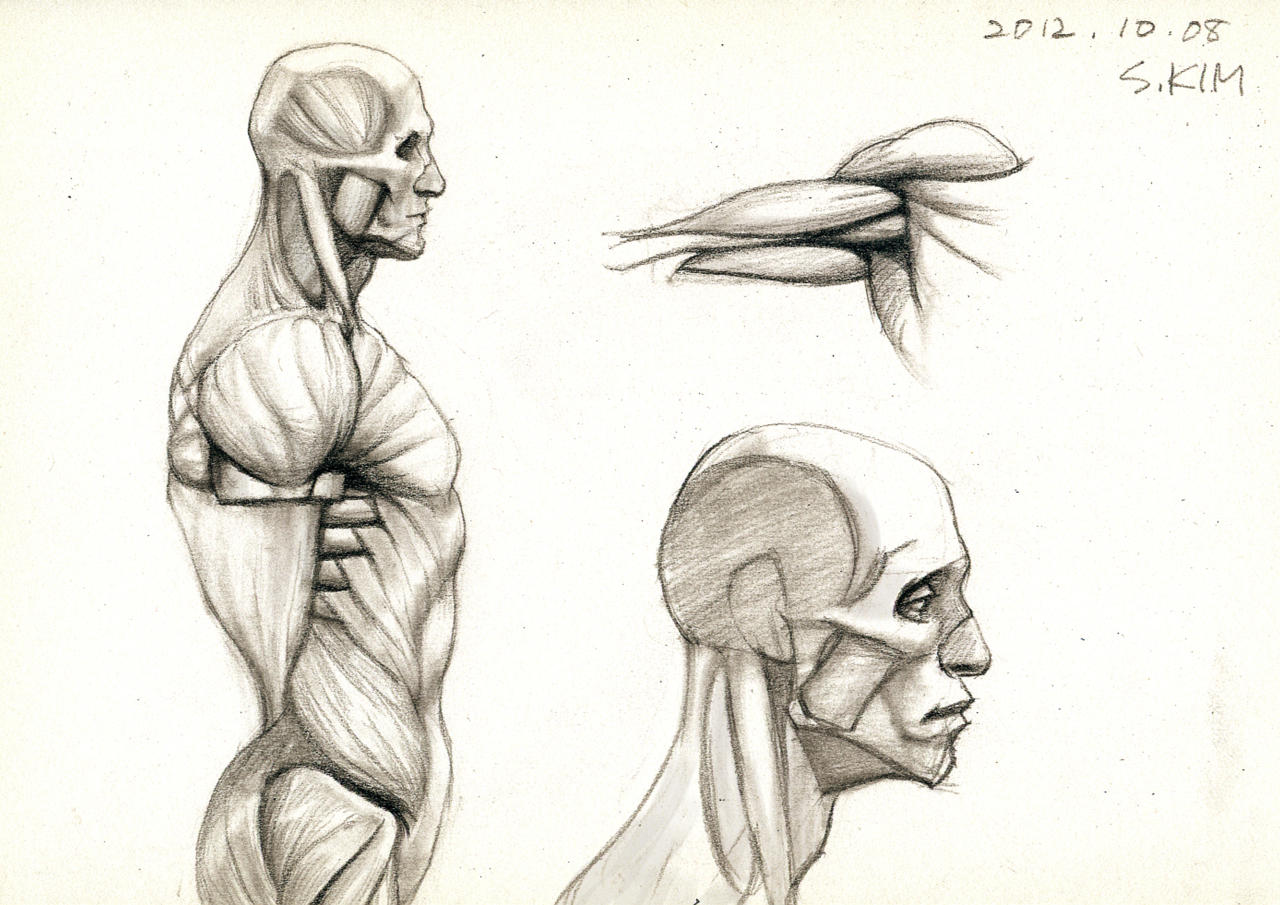 Anatomy Study by Kimsuyeong81 on DeviantArt