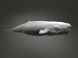 Sperm Whale by Kimsuyeong81