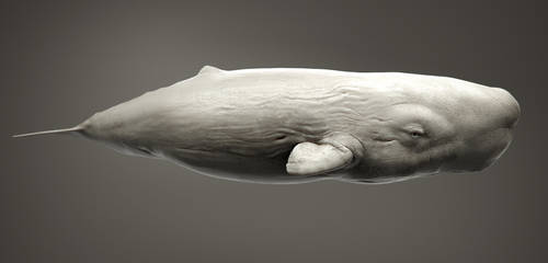 Albion Sperm Whale by Kimsuyeong81