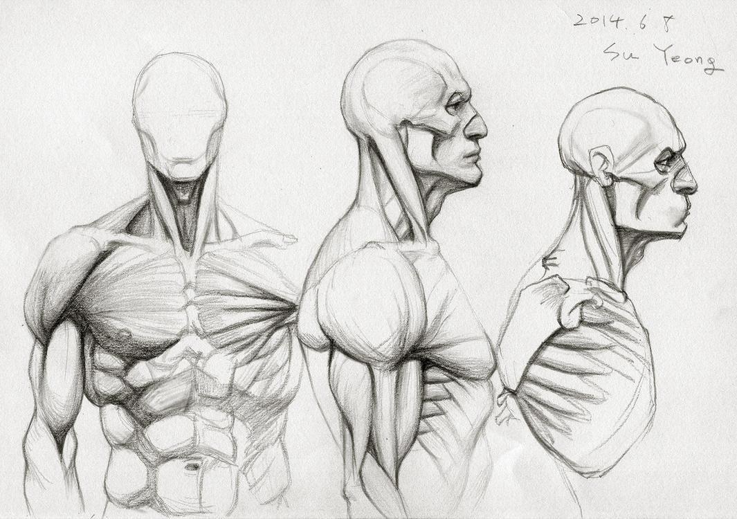 Anatomy Study 2014.06 by Kimsuyeong81 on DeviantArt