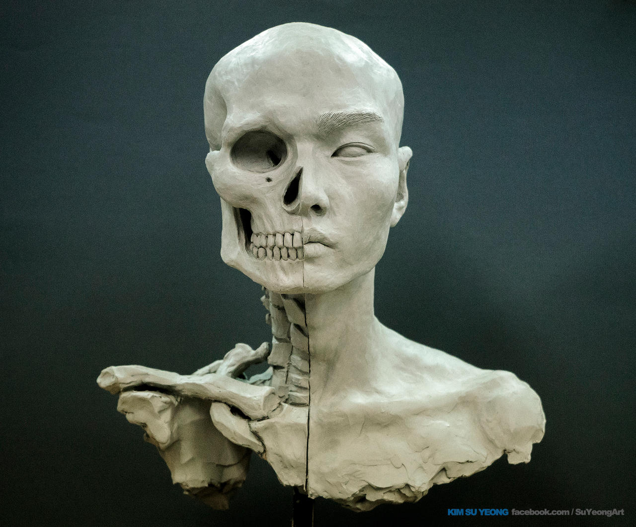 Anatomy For Sculptures Image collections - human anatomy diagram organs