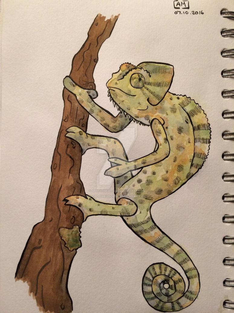 Chameleon  by spot1the2dog3