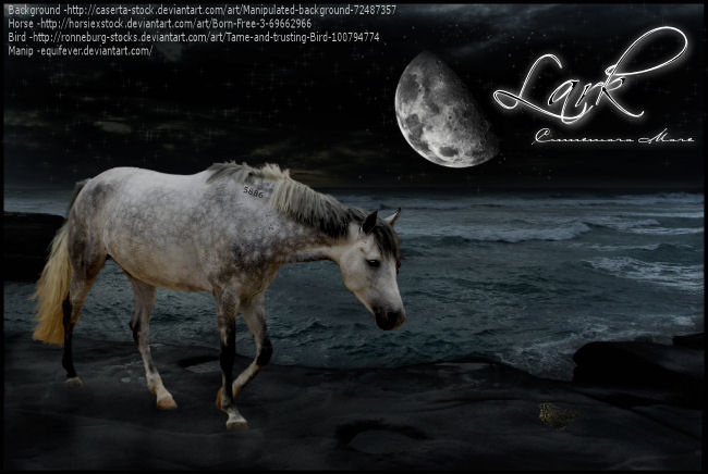 ^ Twilightstars ^ horses Lark_Manip_by_Equifever