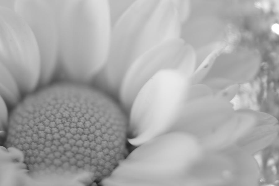 petal. by clarkegi