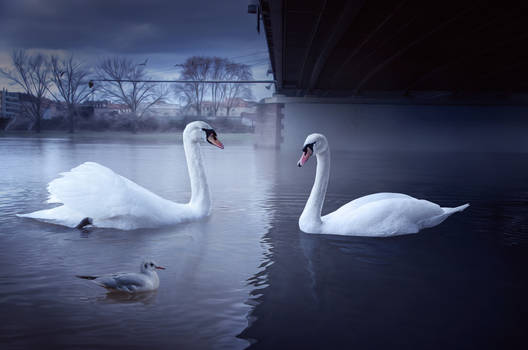 Love under the bridge