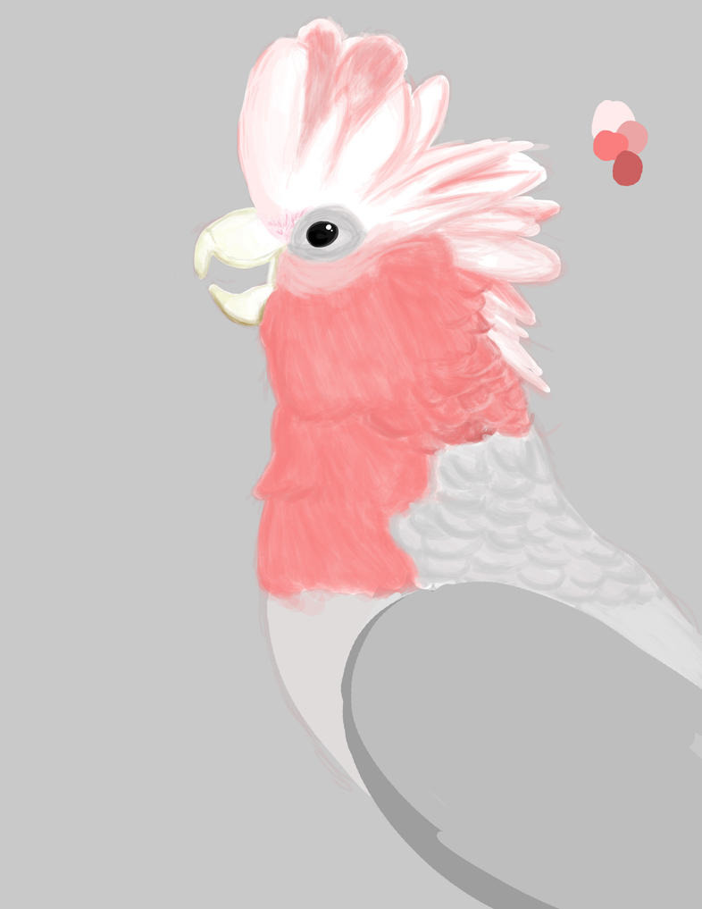 Galah Photoshop [WIP] by LifeStorme