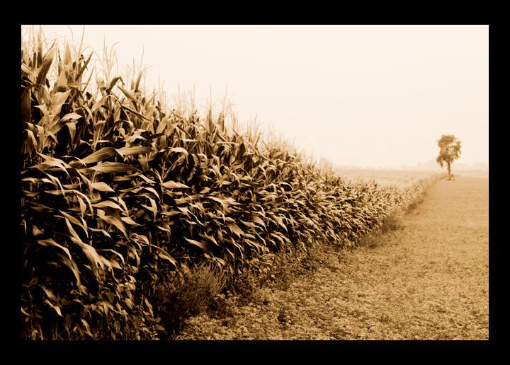 Field of Lonliness by lorrainemd
