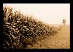 Field of Lonliness