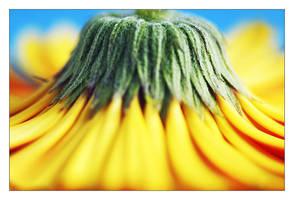 Dusting Sunshine by lorrainemd