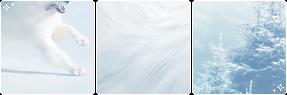 samoyed [deco]