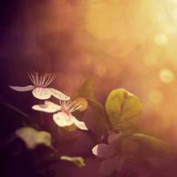 Flower III by haur