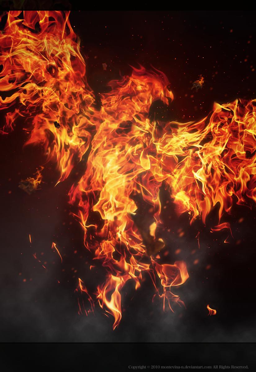 Phoenix by montevina-n