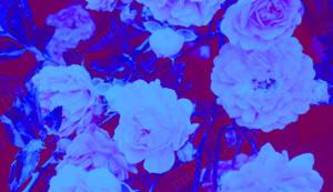 Photo: Blue Stems