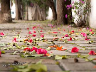 Autumn in Bodrum - Turkey by pinkblue