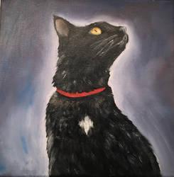 Black_Cat_01