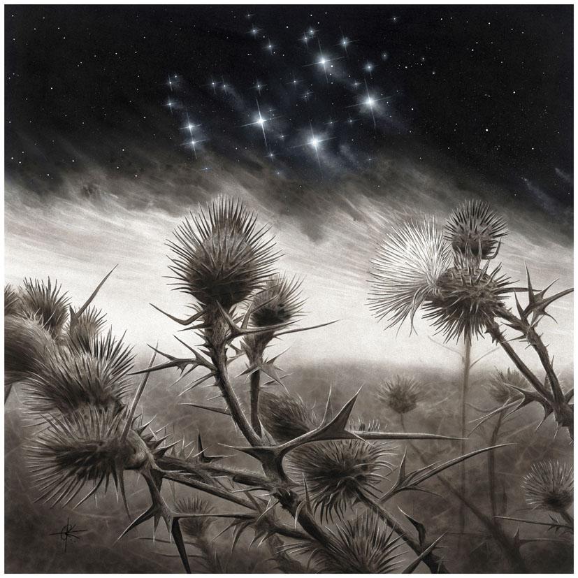 Pleiades by RainerKalwitz