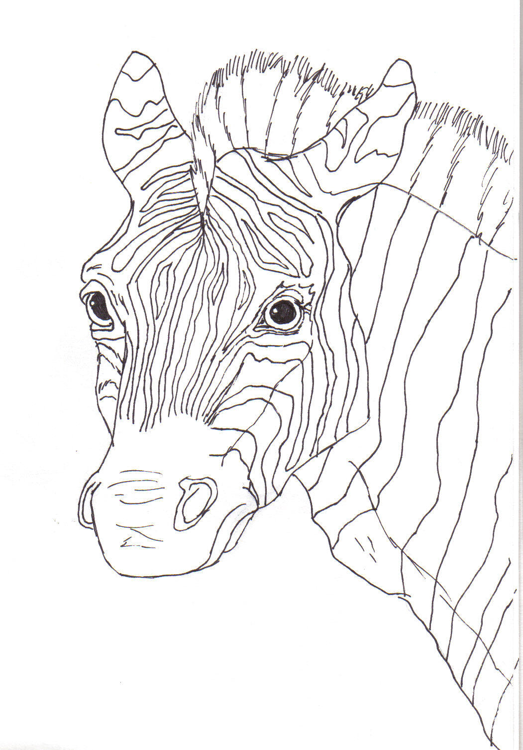 Line Drawing Zebra : Zebra line art by canislupes on deviantart