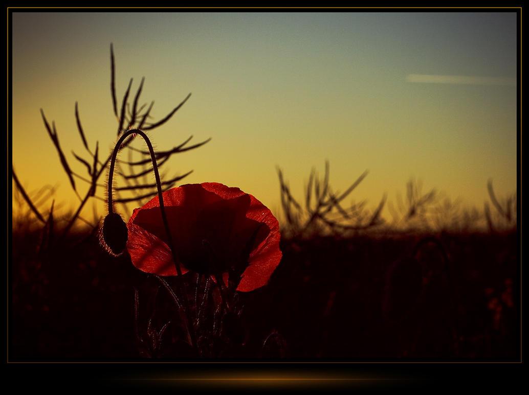 sunrise by voytela
