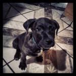 My dog: Gade