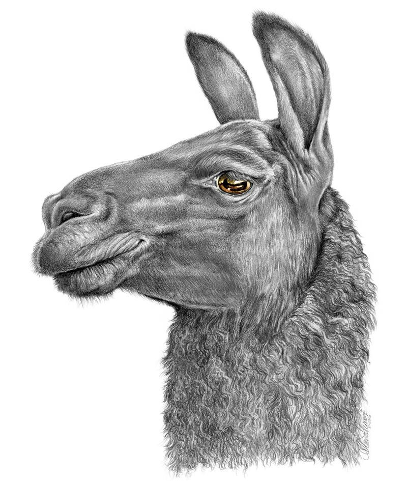 Llama Face by AthenaTT