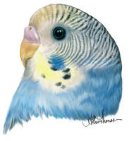 A Budgie for Speckledrose