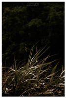 THE BAD BULRUSH by LEQUARK