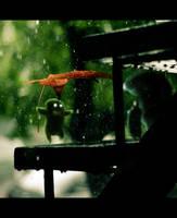 THE BAD RAIN by LEQUARK