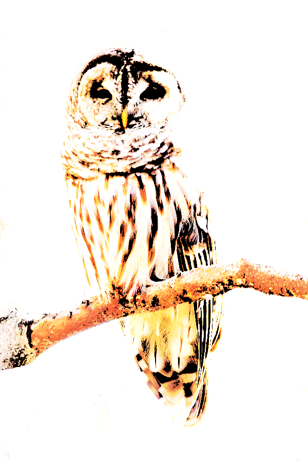 owl_by_flip82-d5yaid3.png