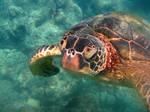 Turtle Investigation