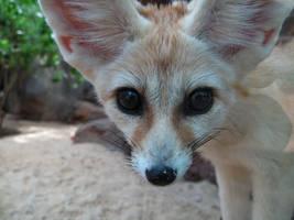 Desert Puppy by X5-442