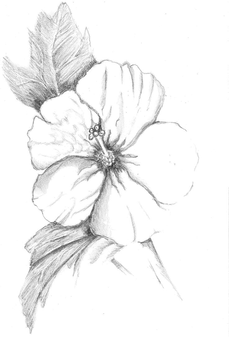 Hibiscus flower by josephnorris on deviantart for Hibiscus flower tattoo sketches